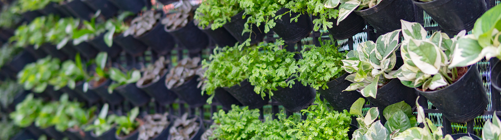 Vertical Farming - the reinvention of horticulture?